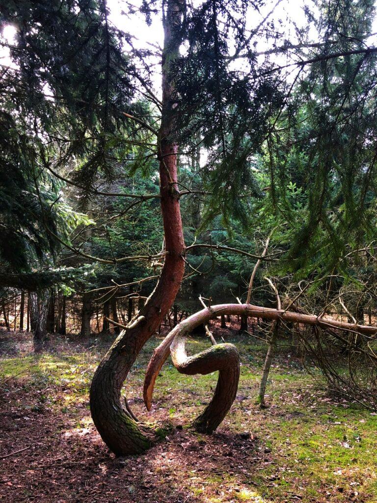Kroget træ