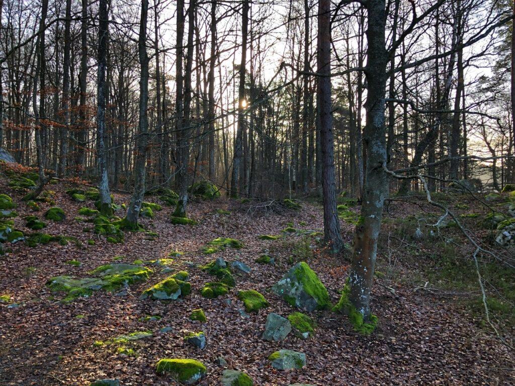 Sol mellem træerne