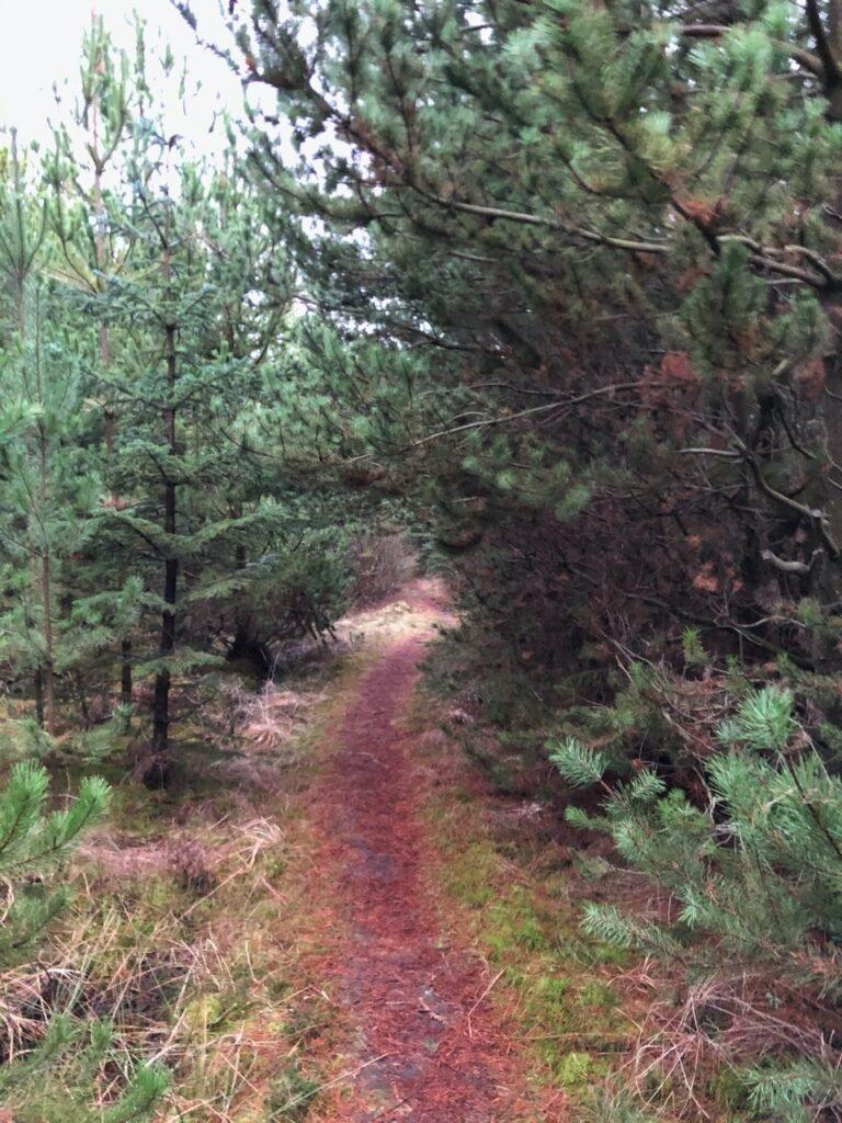 Skov tæt på Skiveren Kandestederne